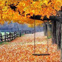 پاییز این روز ها ….