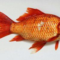 """انتقال """"سل پوستی"""" از ماهی قرمز به انسان"""